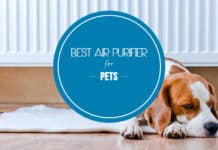 air purifier for pets
